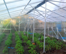 It is possible to receive income of 20-25 million soums per year  from a greenhouse on 2 ha