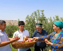 The head of the primary organization helped to plant the garden of early ripe apple trees in Kasansay