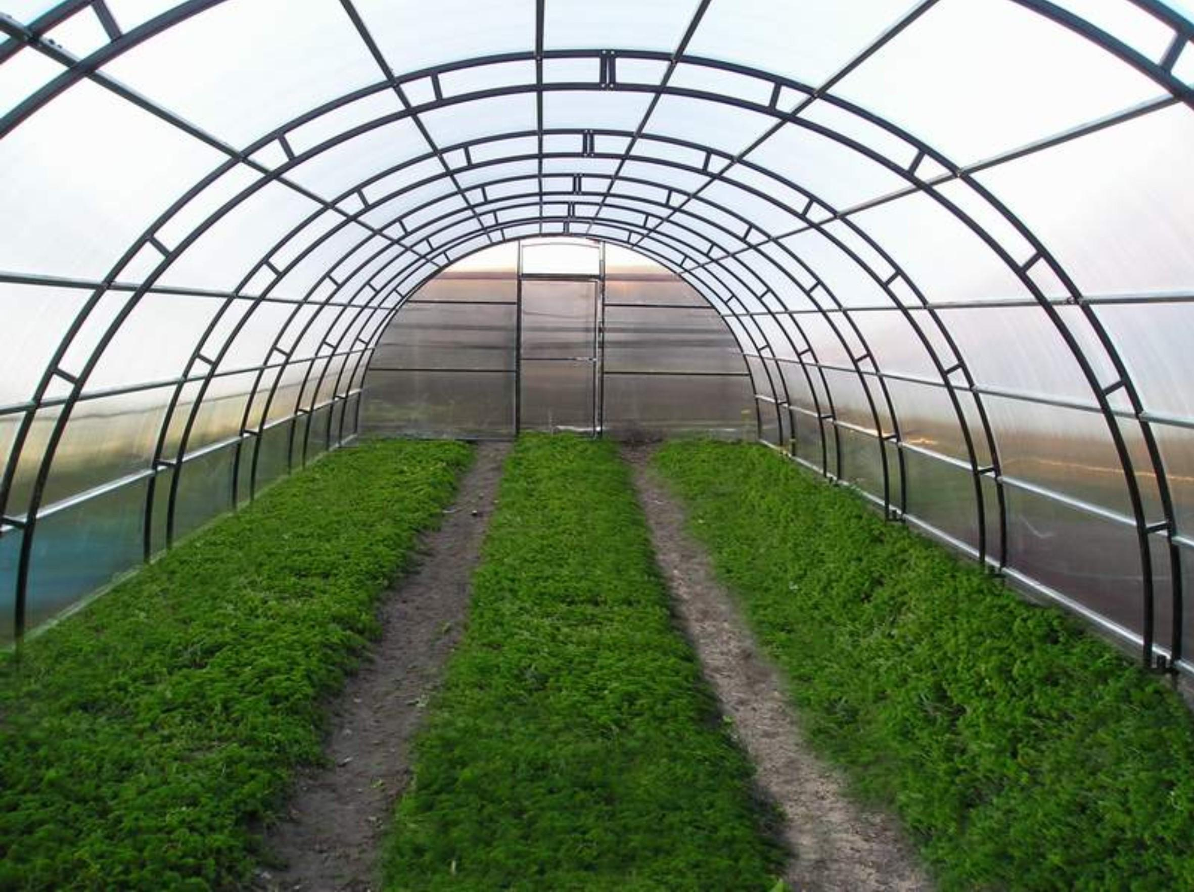 Alimardon Yodgorov built a greenhouse on 1,5 hectares with the assistance of the party in Rishtan district